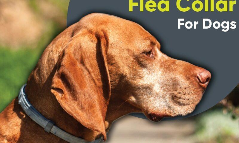 best Flea collar for Dog