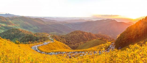 flower valley uttarakhand