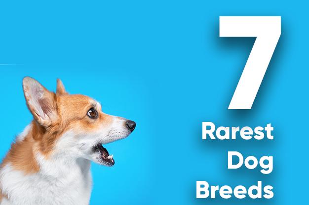 7 rarest dog breed